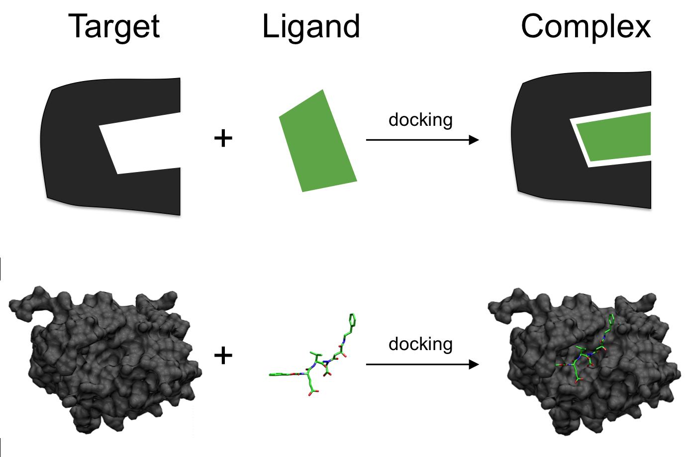 target-ligand-complex-schluessel