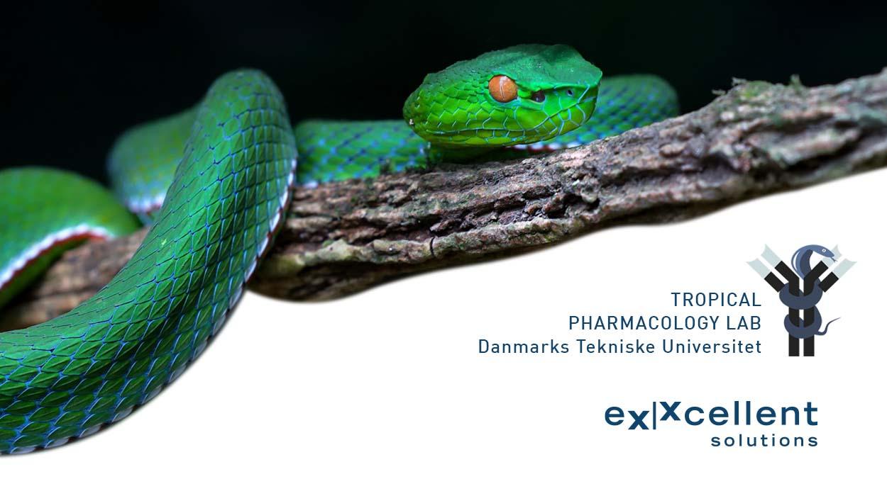 Kooperation zwischen dem Tropical Pharmacology LAB der DTU und eXXcellent solutions